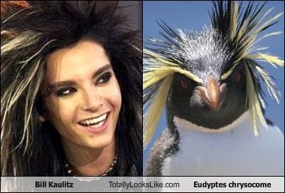 Totally looks like