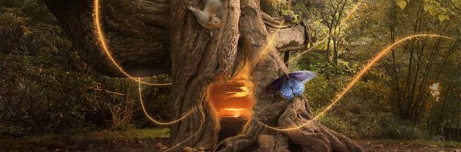 Photomanipulation : un portail magique dans la forêt