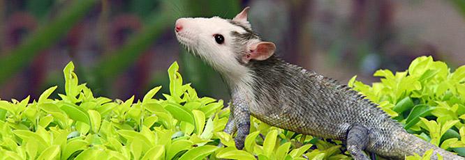 Photomanipulation : Créer un animal hybride en quelques étapes