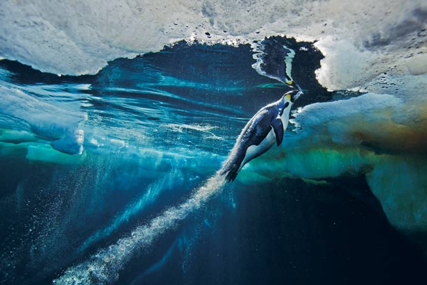 Les photographies de nature de Paul Nicklen