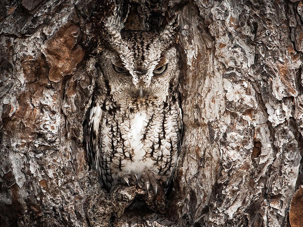 21 spectaculaires photos d'animaux sauvages du concours photo du National Geographic