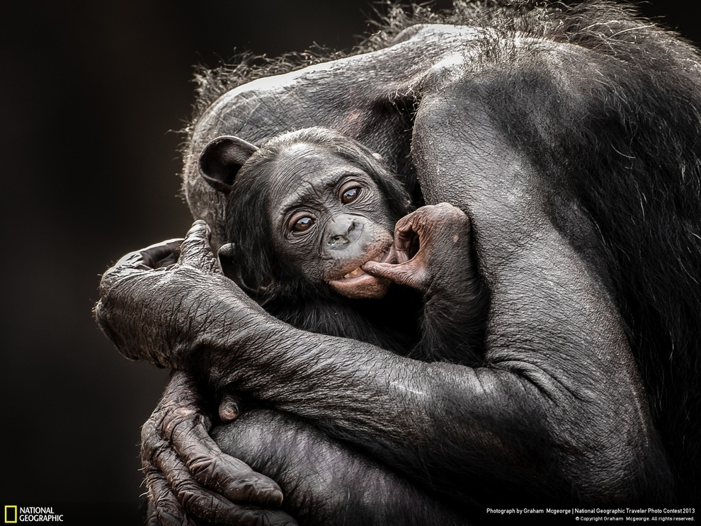 21 spectaculaires photos d'animaux sauvages du concours photo du National Geographic