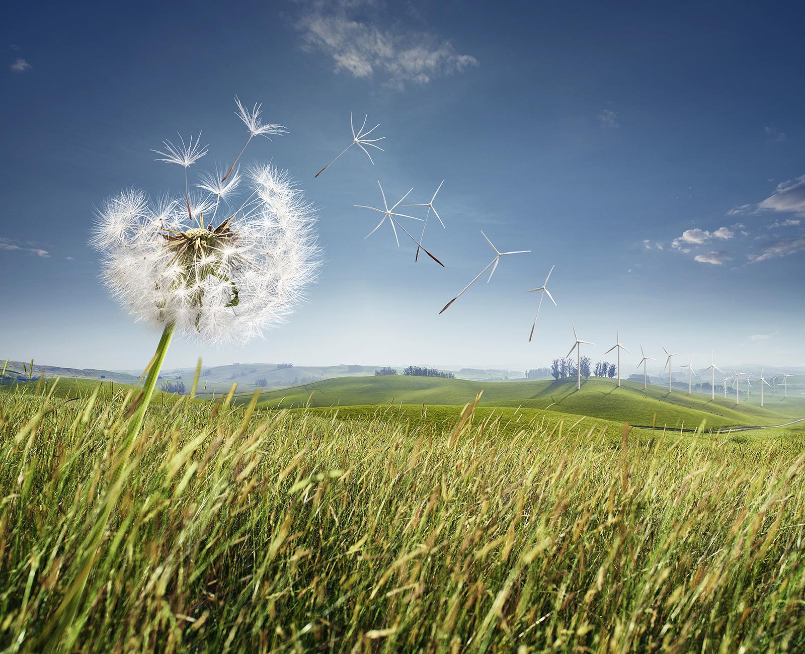 """Harmony with nature"", un projet de photomanipulation qui rafraîchit !"