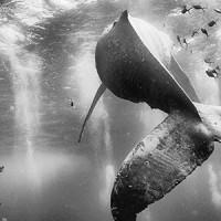 Les 10 vainqueurs du concours photo National Geographic Traveler 2015