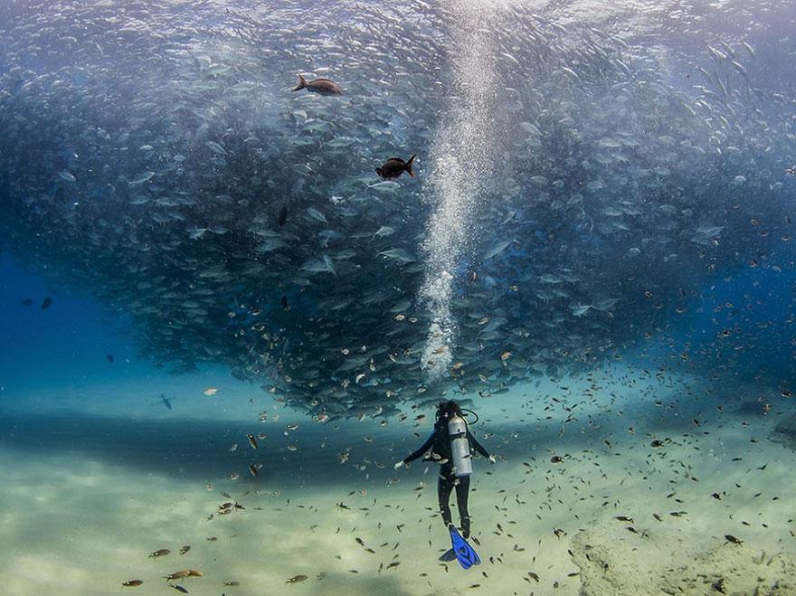 Le top 20 des photos de National Geographic 2015