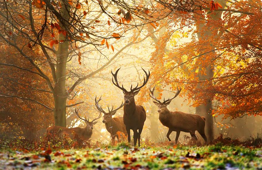 35 photos d'automne enivrantes