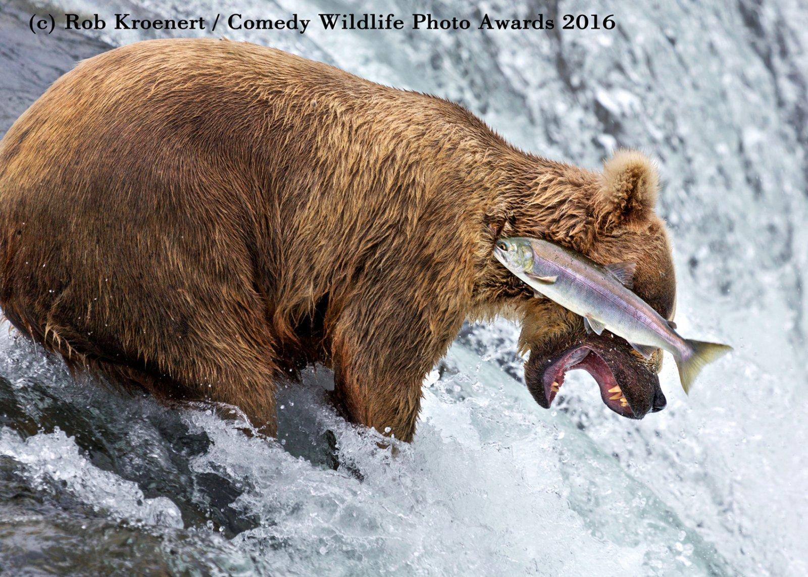 40 clichés marrants et insolites d'animaux sauvages