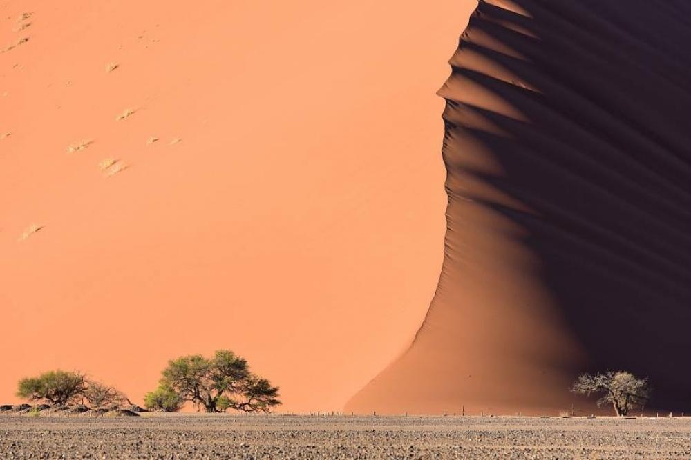 Les 60 plus belles photos sans Photoshop