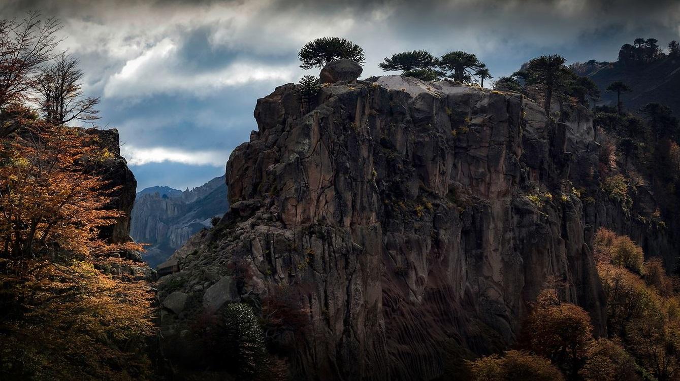 Les Photographies de nature hallucinantes de Francisco Negroni