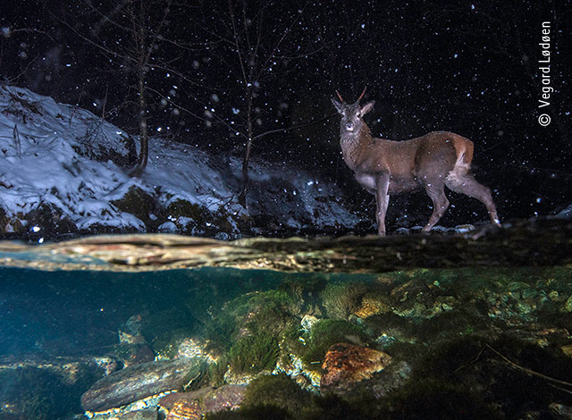 Photographies d'animaux : les vainqueurs du Wildlife Photographer 2018