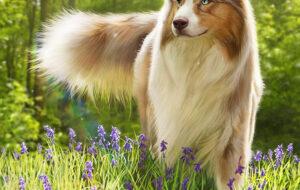 digital_painting_illustration_chien