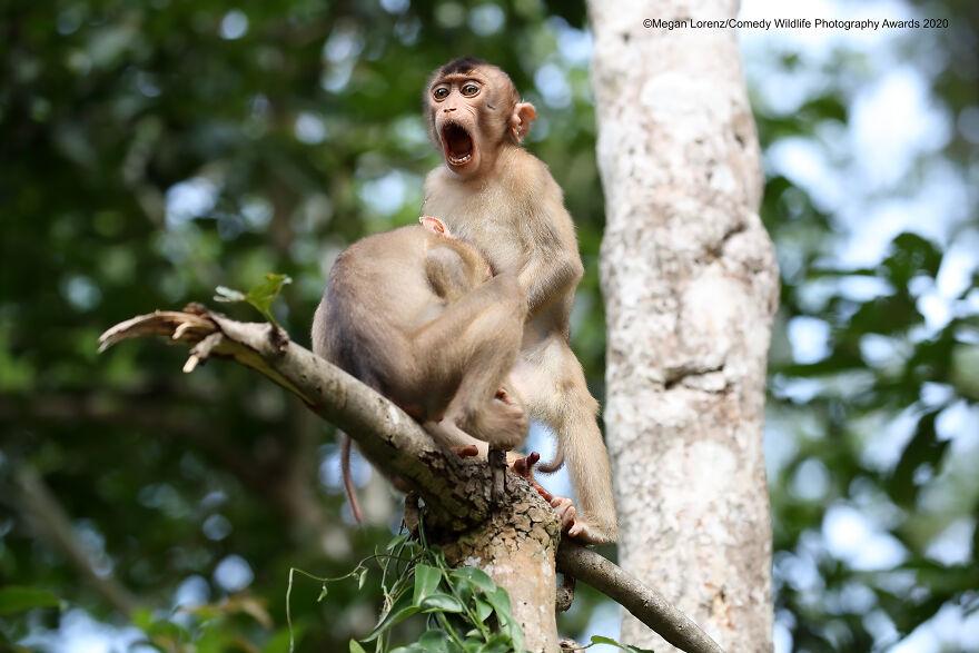 Quand les animaux nous font marrer : les gagnants du Comedy Wildlife Awards 2020